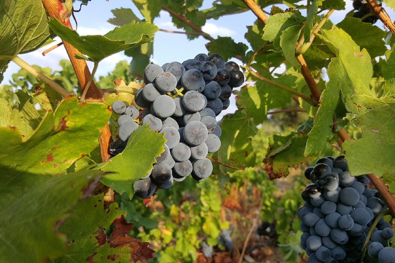 Vignoble de Catalogne Sud