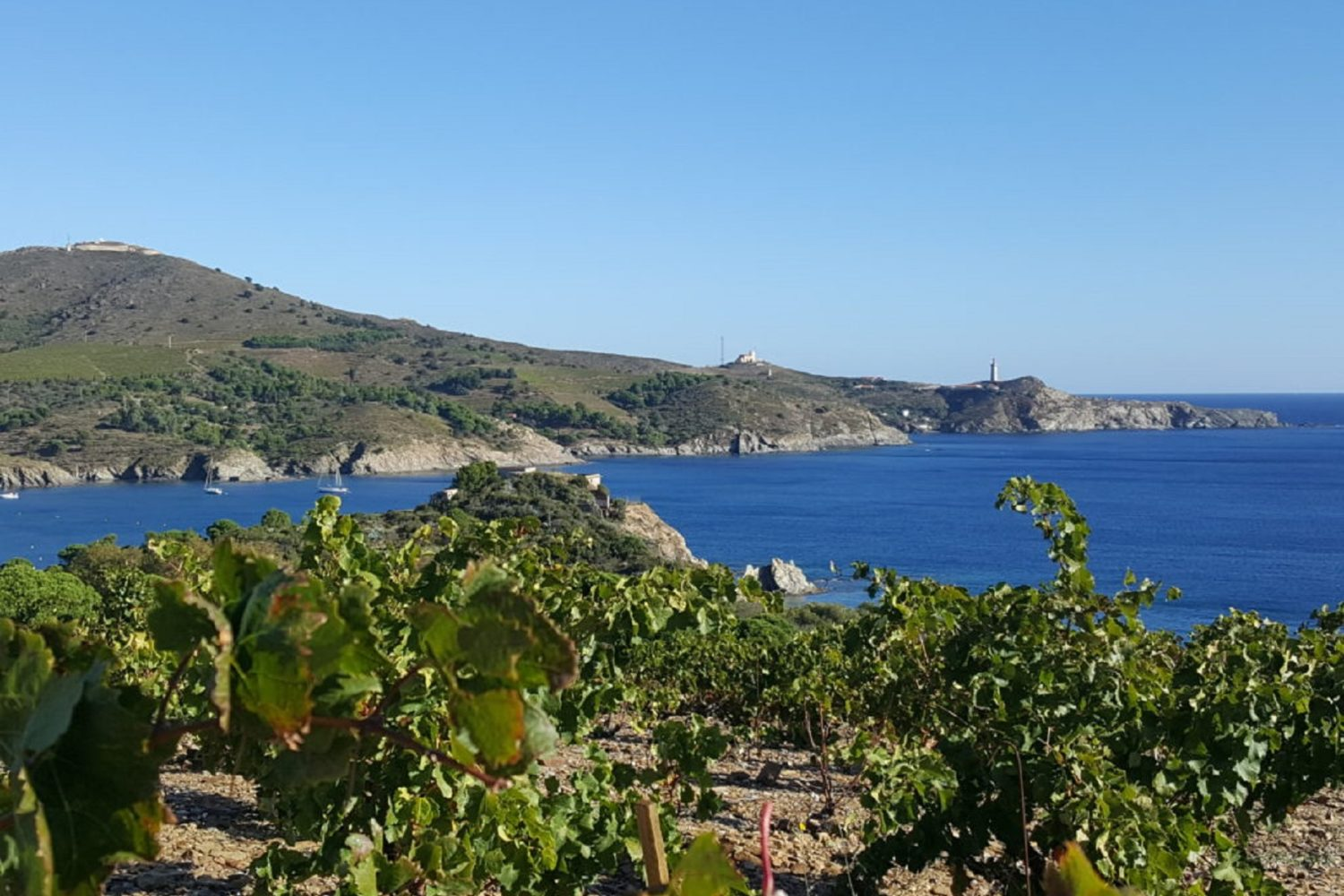 Vignoble de Collioure