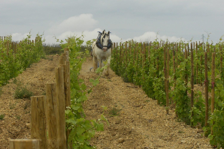 Visites de vignobles en Languedoc Roussillon